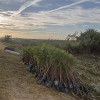 Press Release: Restore the Earth Foundation Breaks Ground on One-Million-Acre Landscape-Scale Restoration Project