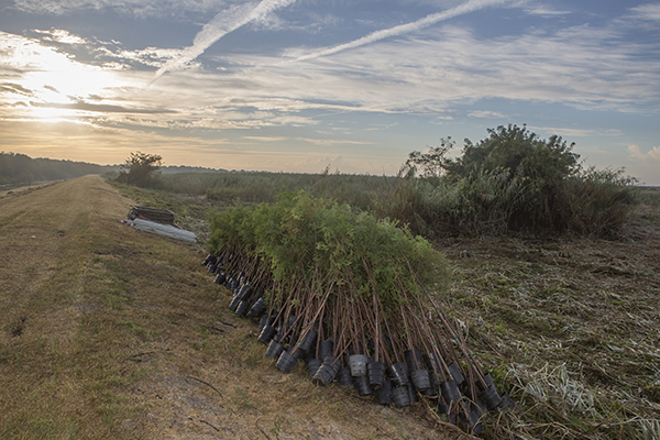 10.27.16 Restore the Earth tree planting and coastal restoration kick off of their project to restore 4,000 acres of freshwater-forested wetland in the Pointe-aux-Chenes Wildlife Management Area. Montegut, Louisana