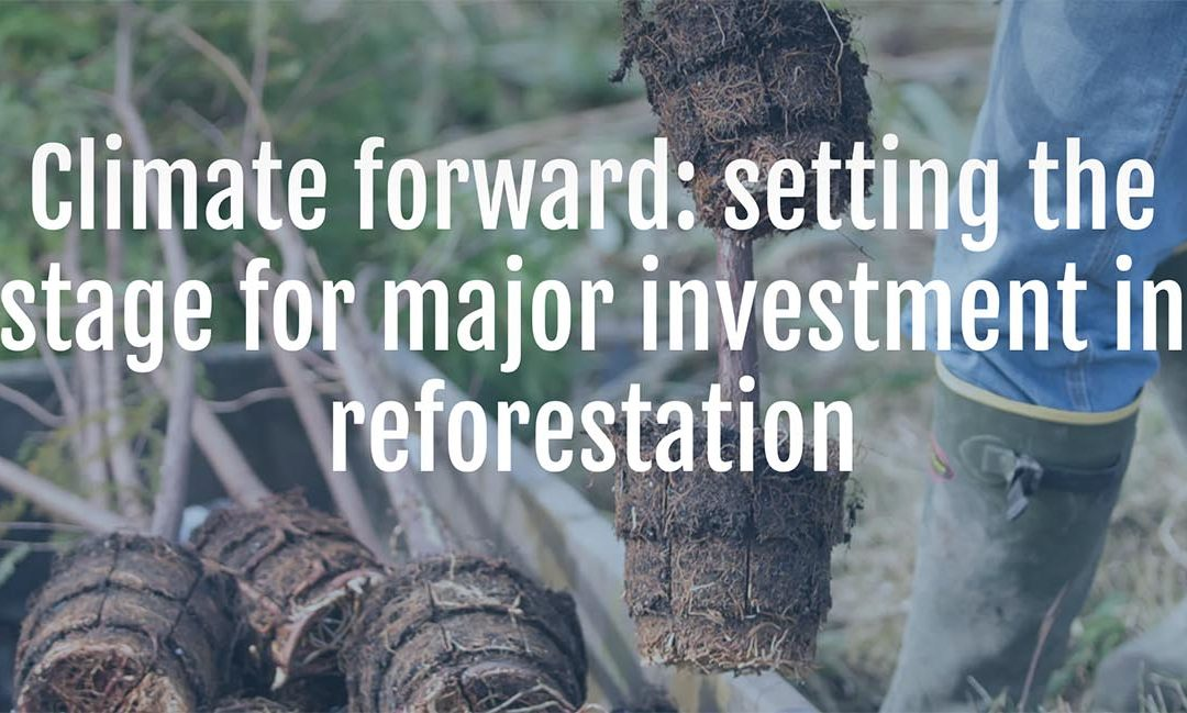 Climate Forward: Setting the Stage for Major Investment in Reforestation