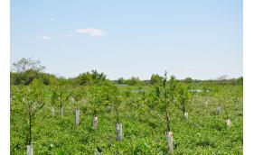 Restore the Earth Foundation Awarded $7.4 million USDA Grant for Critical Pilot Project in North America's Amazon -The Mississippi River Basin