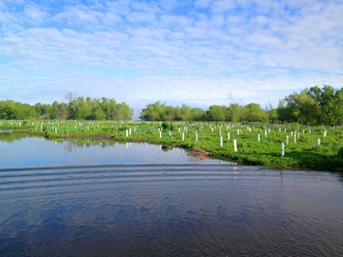 A Speedy Recovery: Coastal partnership completes planting of 10,000 trees in the month of April