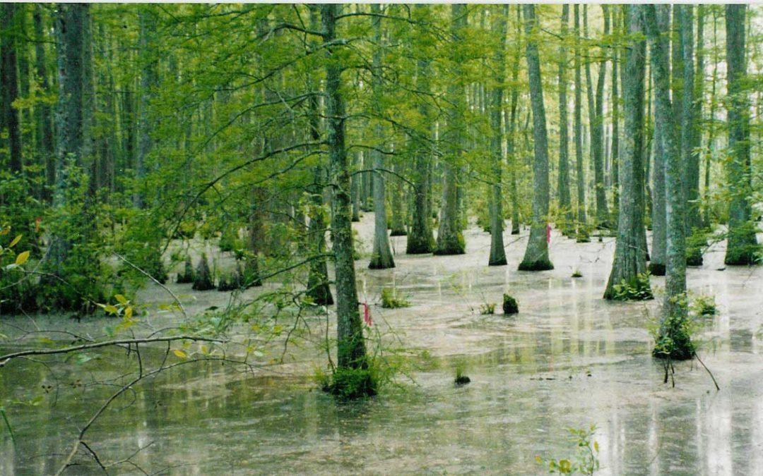Ecosystem Defenses are Critical to Dutch Flood Management